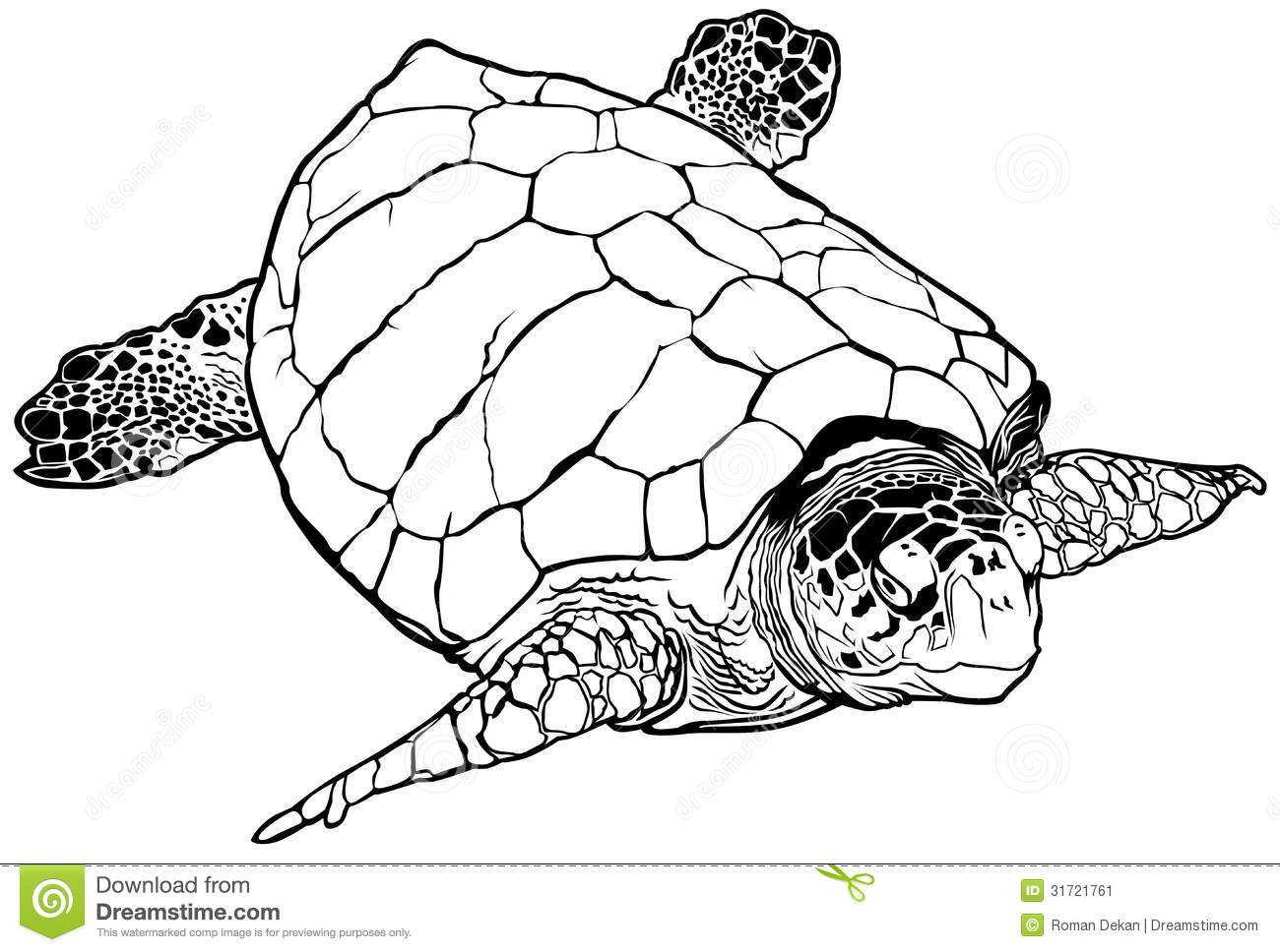 Loggerhead Turtle Clipart