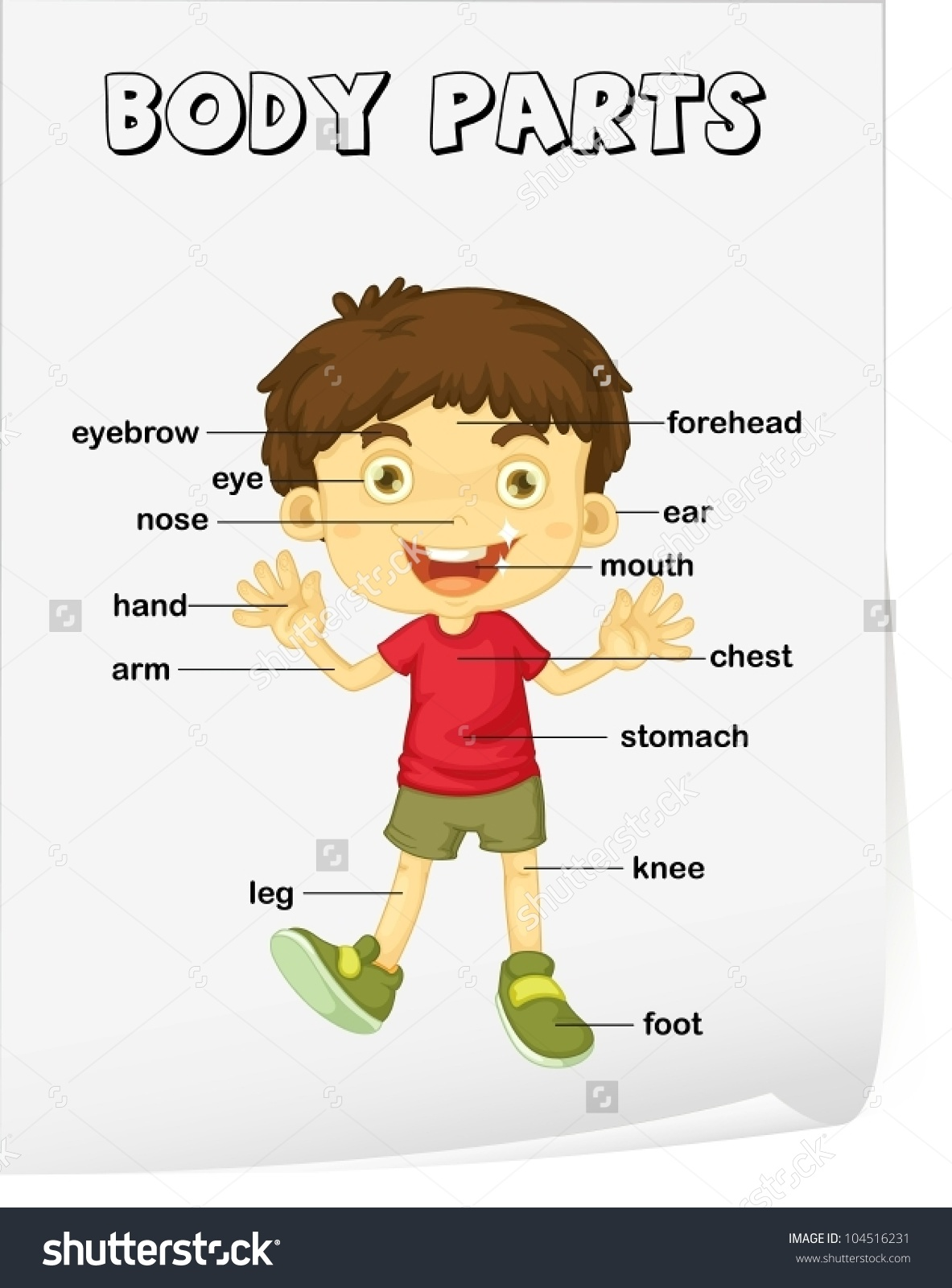 Parts Of The Body Clipart 20 Free Cliparts