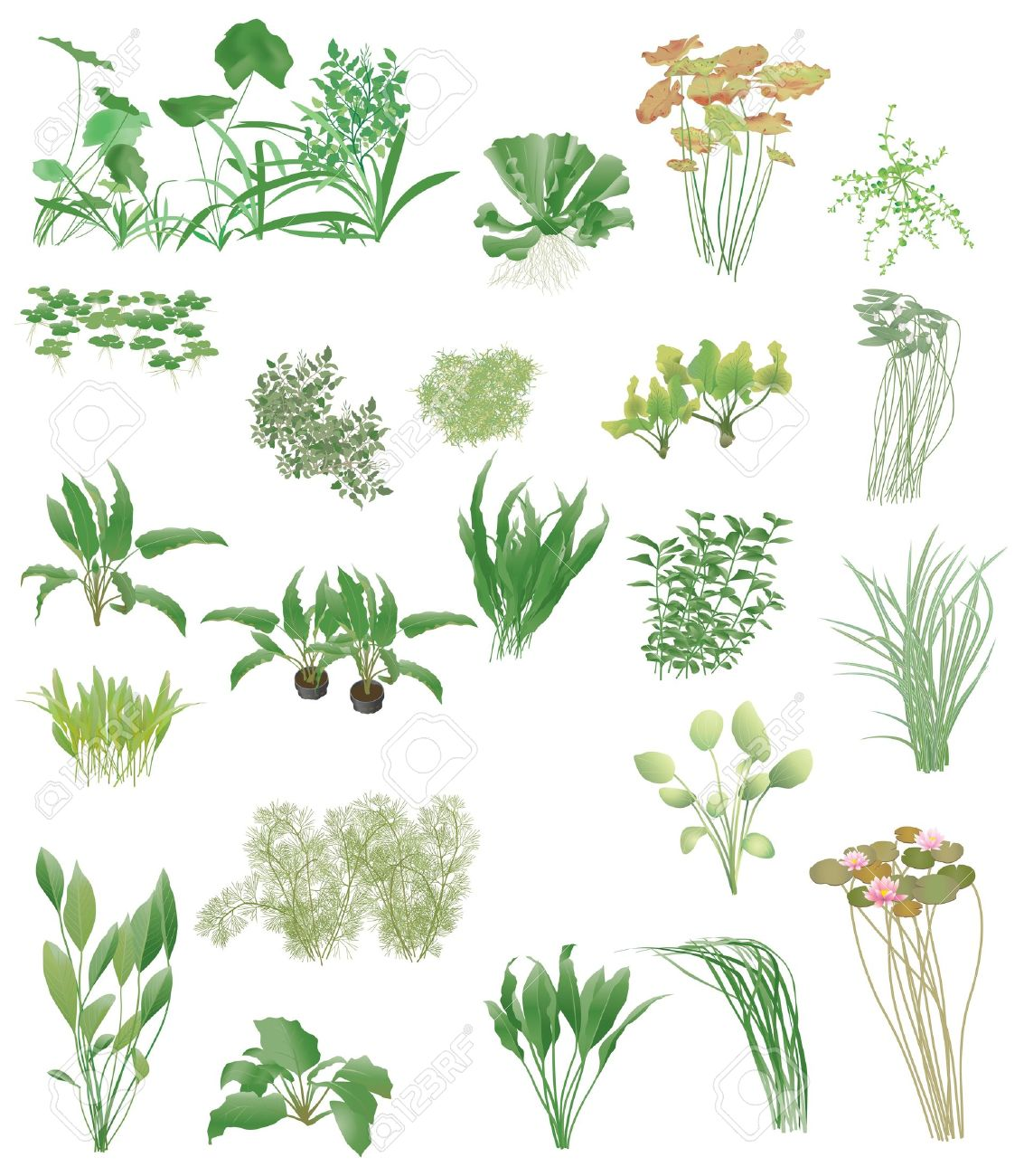 Pond Plants Clipart 20 Free Cliparts