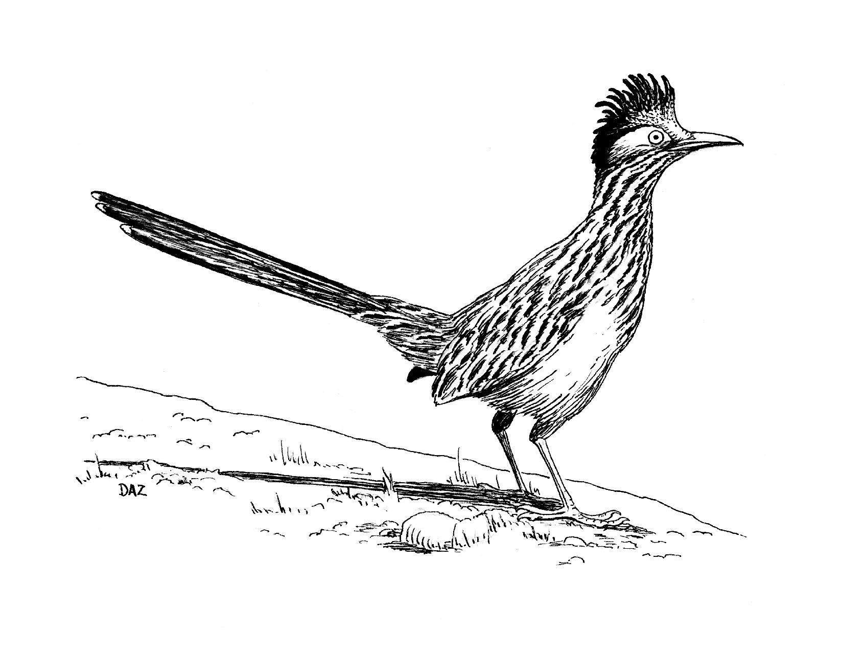 Roadrunner Bird Clipart