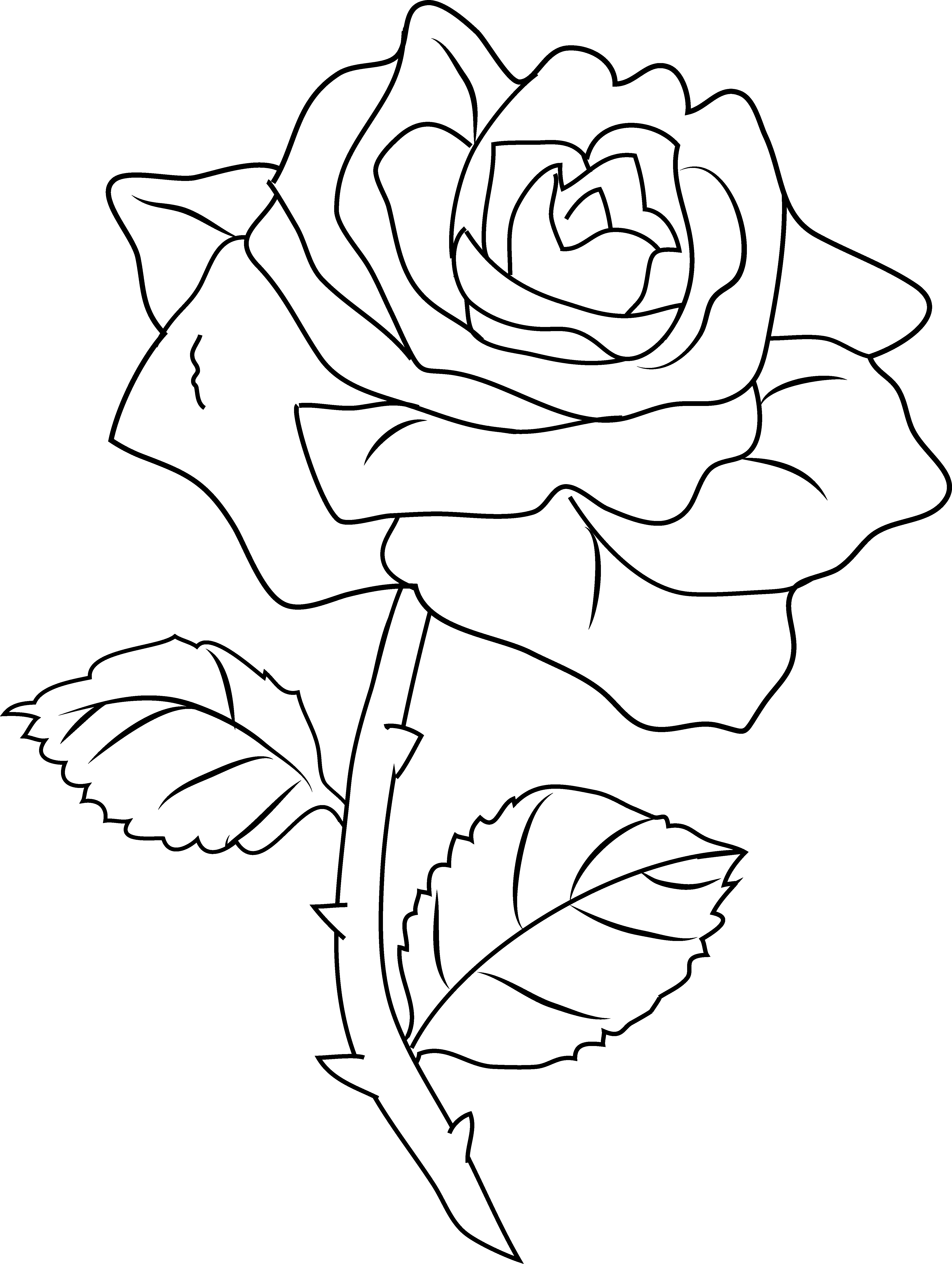 Rose Color Clipart 20 Free Cliparts