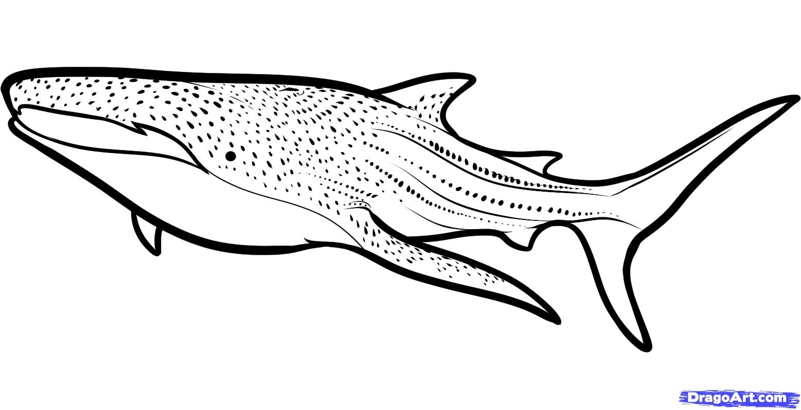 Whale Shark Clipart 20 Free Cliparts
