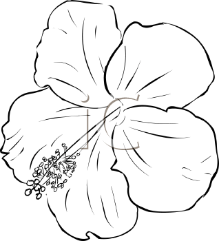 White Hibiscus Flower Clipart Clipground