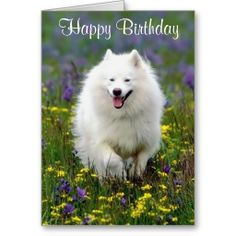White Husky Happy Birthday Clipart 20 Free Cliparts Download Images On Clipground 2019