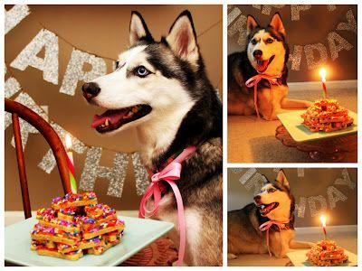White Husky Happy Birthday Clipart 20 Free Cliparts
