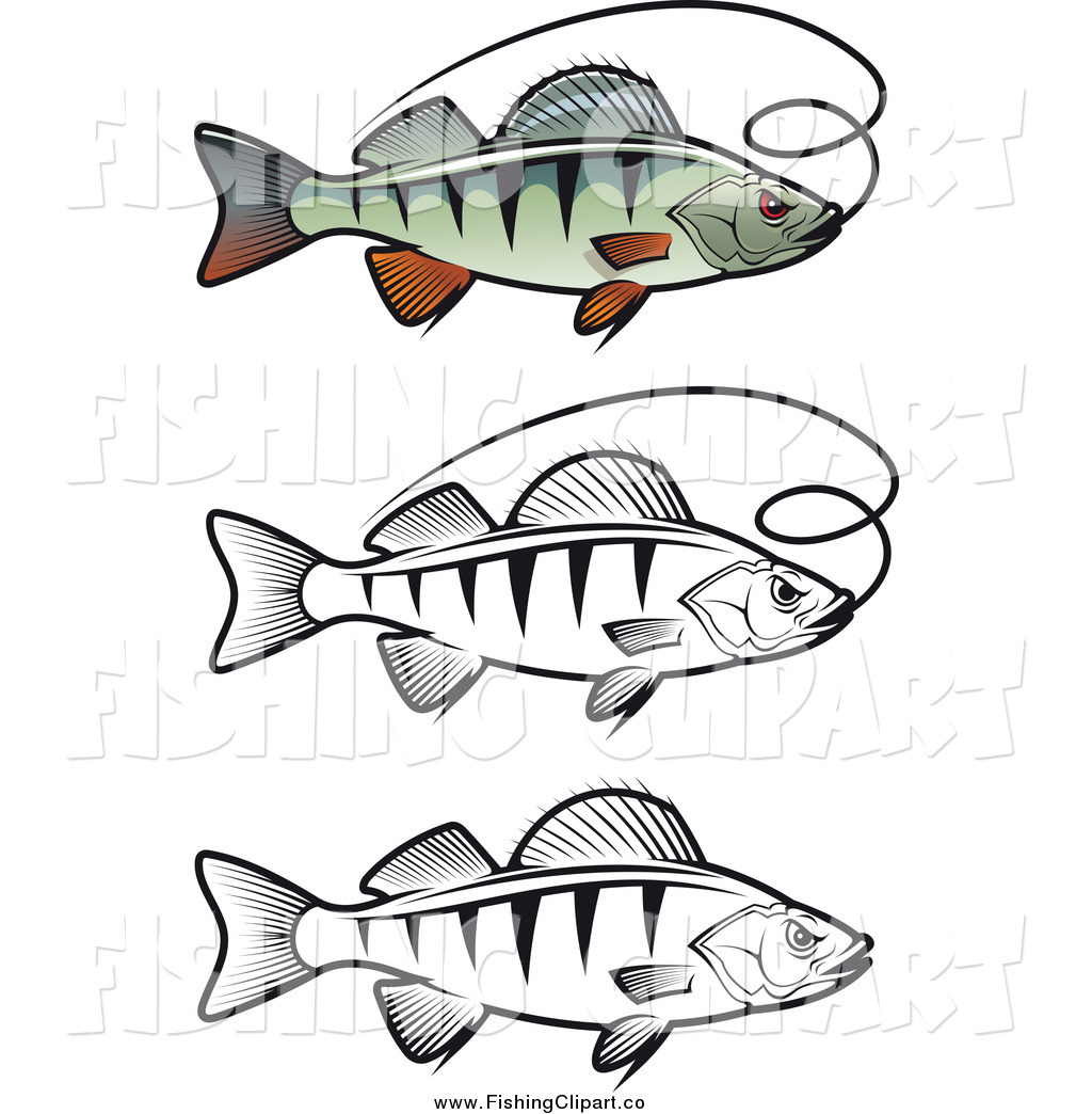 White Perch Clipart 20 Free Cliparts