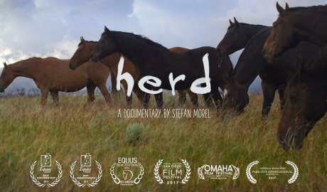 Herd: A Spiritual Journey