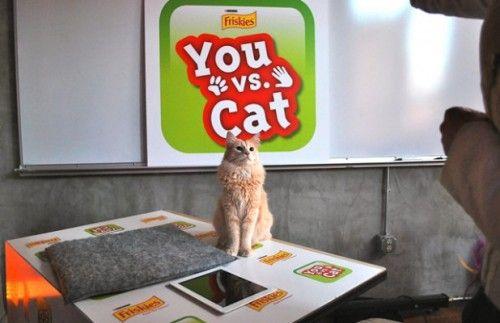 you vs cat