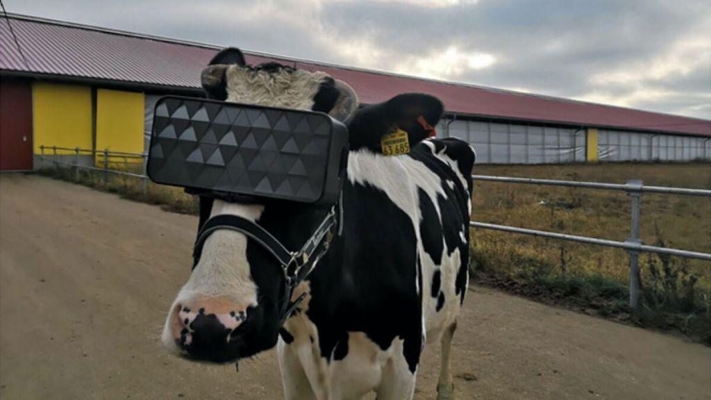 vaca VR leche