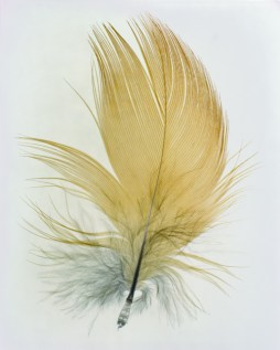 feather4