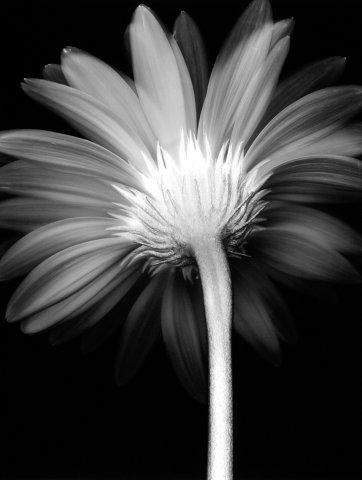 Flower_08A_1996