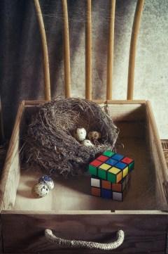 A Nest Treasure