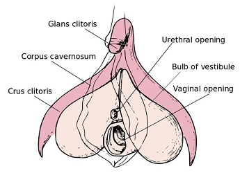 largest clitoris in the world