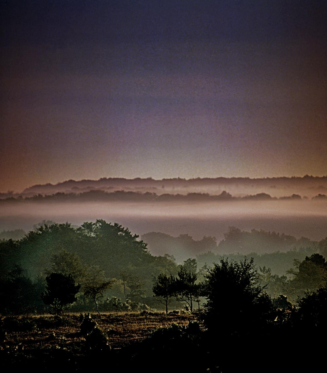 New-Forest-CPRE.landscape-Arrowsmith.©.1.jpg