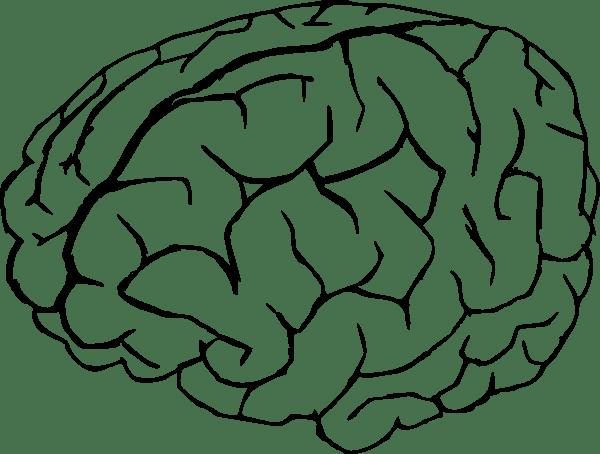 Brain Drawing Clip Art At Clker.com