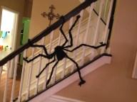 Big Fuzzy Stair Spider