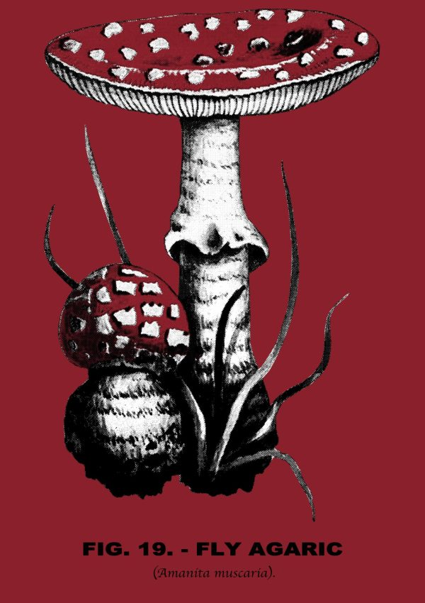fly agaric (amanita mascara) botanical illustration screen print from Closet of Mysteries