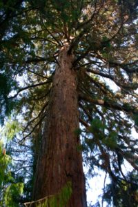 Redwood at Prospect Park Redlands CA