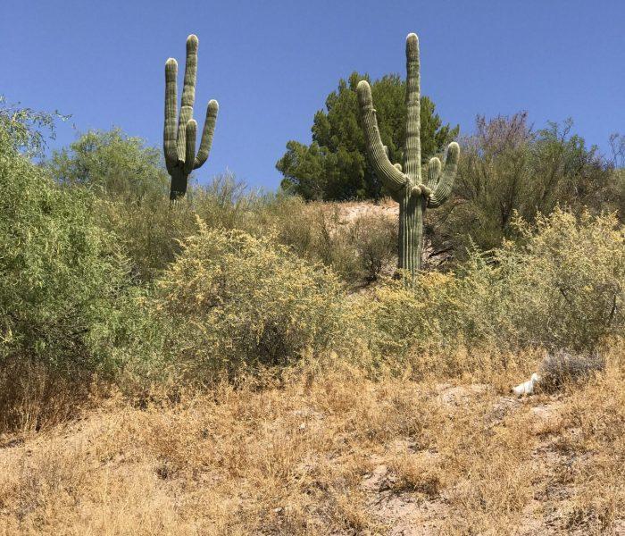 Wickenburg, Arizona (Part 1)