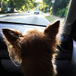 Eyes on the road
