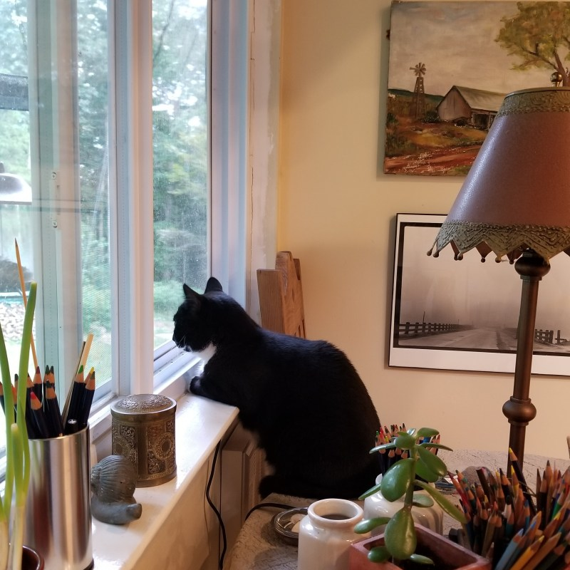 He leans on the sill to watch the birds