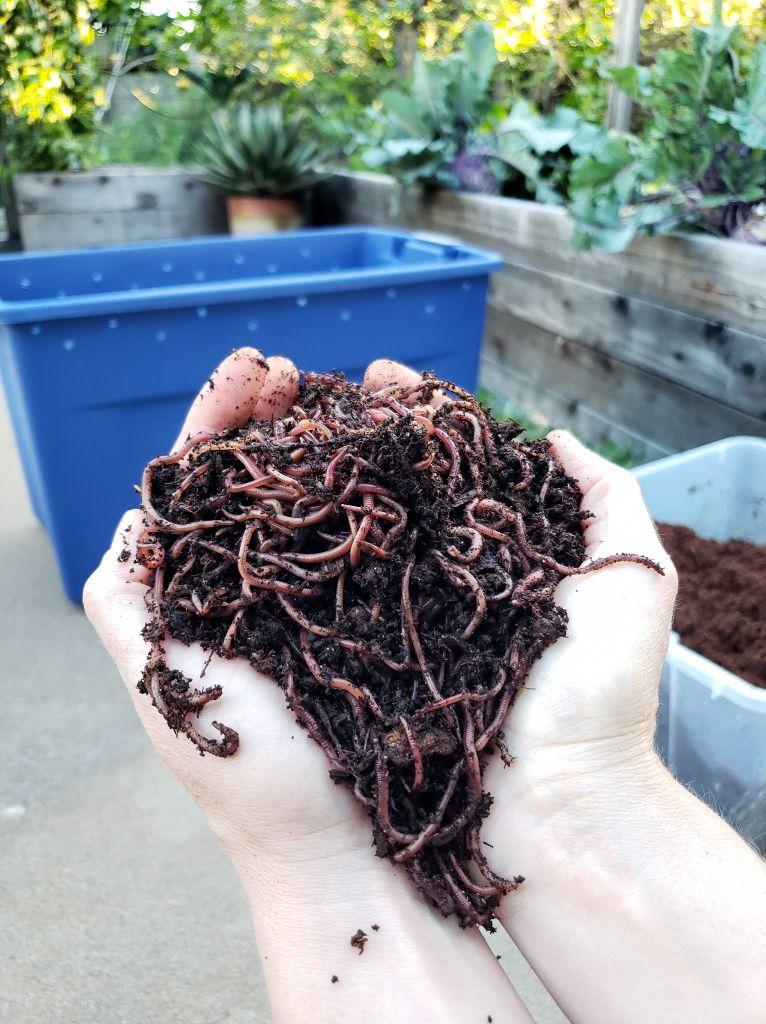 worm compost, vermicomposting