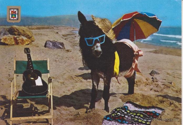 637) burro. asno en la playa - Vendido en Venta Directa - 54657217