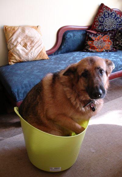 zora-in-a-bowl.jpg