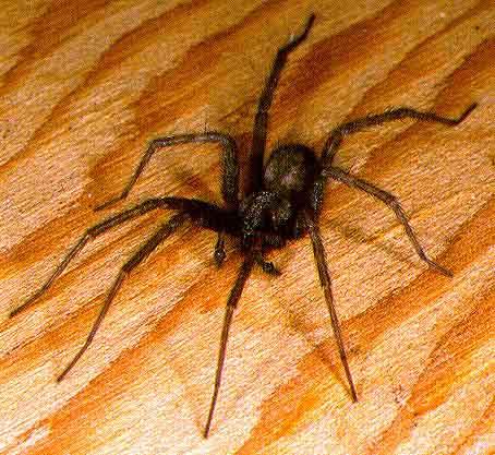 spiders-and-mistletoe3