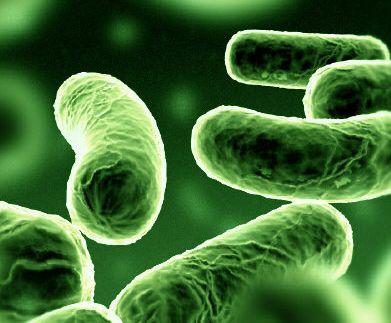worm bacteria