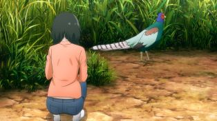 A pheasant!