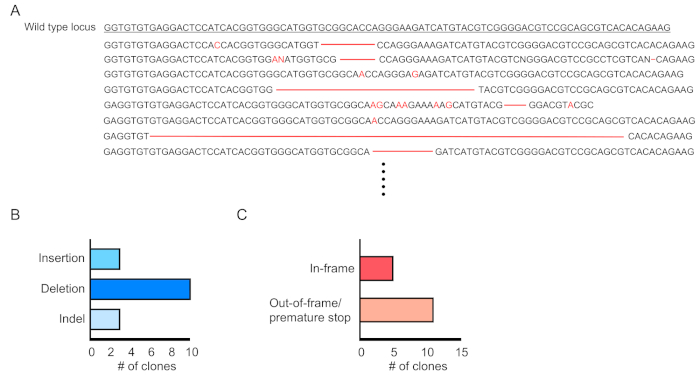 Lentiviral Crisprcas9 Mediated Genome Editing For The Study