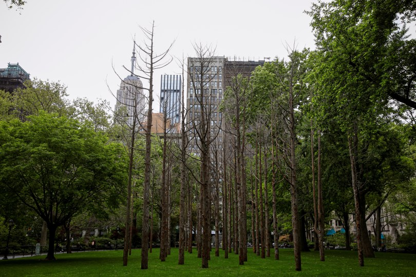 """The Empire State Building is seen towering over """"Ghost Forest"""" an art installation designed by artist Maya Lin in Madison Square Park in the Manhattan borough of New York City, New York, U.S., May 10, 2021. REUTERS/Brendan McDermid"""