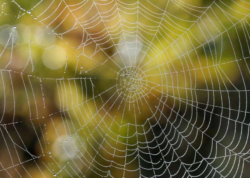 Drops of water are seen on a spider's web during harvest at Chateau du Pavillon in Sainte-Croix-Du-Mont vineyard, France, October 22, 2018. REUTERS/Regis Duvignau/File Photo