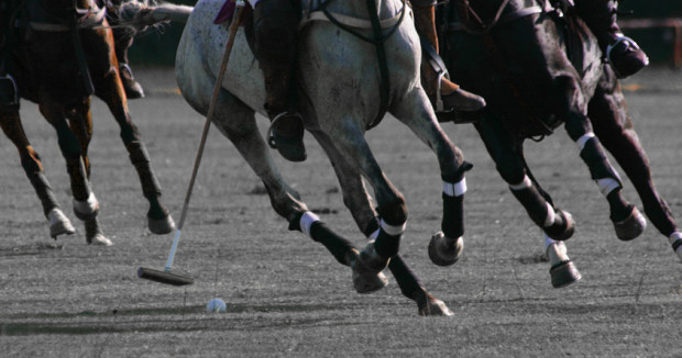 Equestrian Crash Course What You Need To Know About Polo