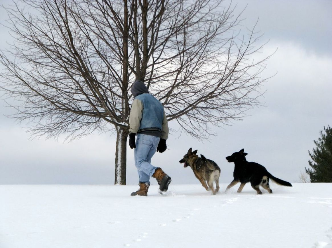 YOUR DOG WILL BECOME YOUR BEST FRIEND THROUGH TRAINING