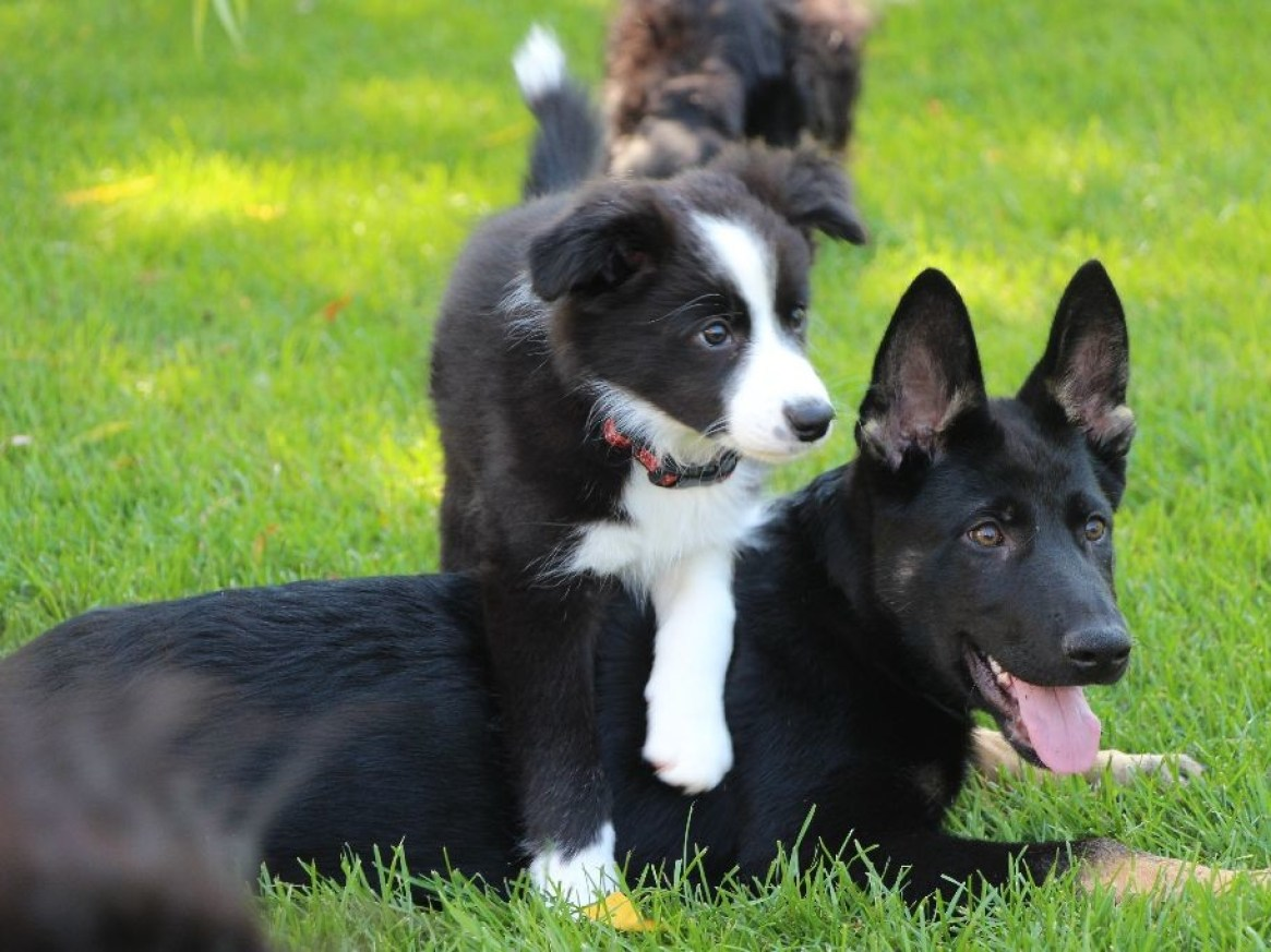 TRAINING BENEFITS PUPPIES AND DOGS OF ALL AGES, SIZES, BREEDS AND BREED MIXES
