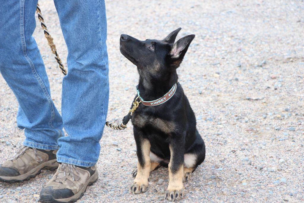 Heel Position - Does Your Dog Understand It? - Cloud Nine Dog Training  School