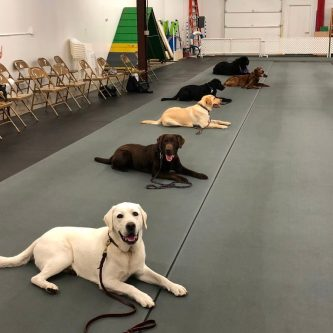 Cloud Nine Dog Training