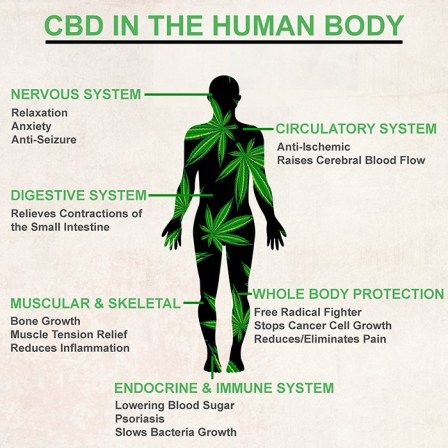 Advantages of CBD in the Human Body