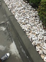 Oyster shell landscaping