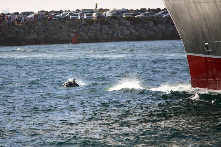 QM2 and Dolphin_1 WA