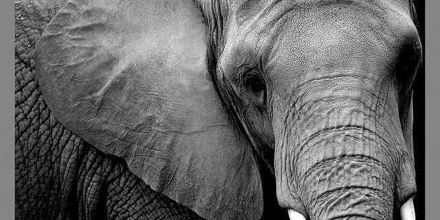 An elephant is the logo for Hadoop