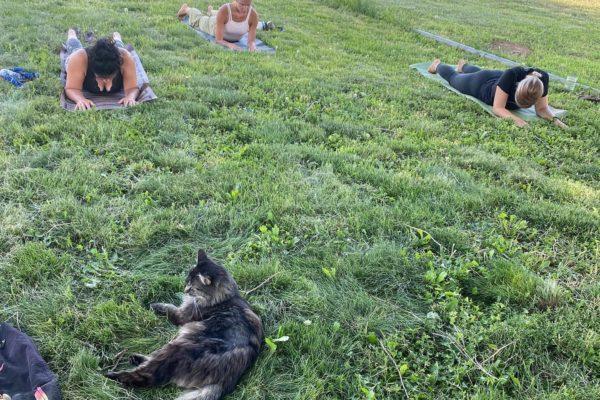 yoga on farm