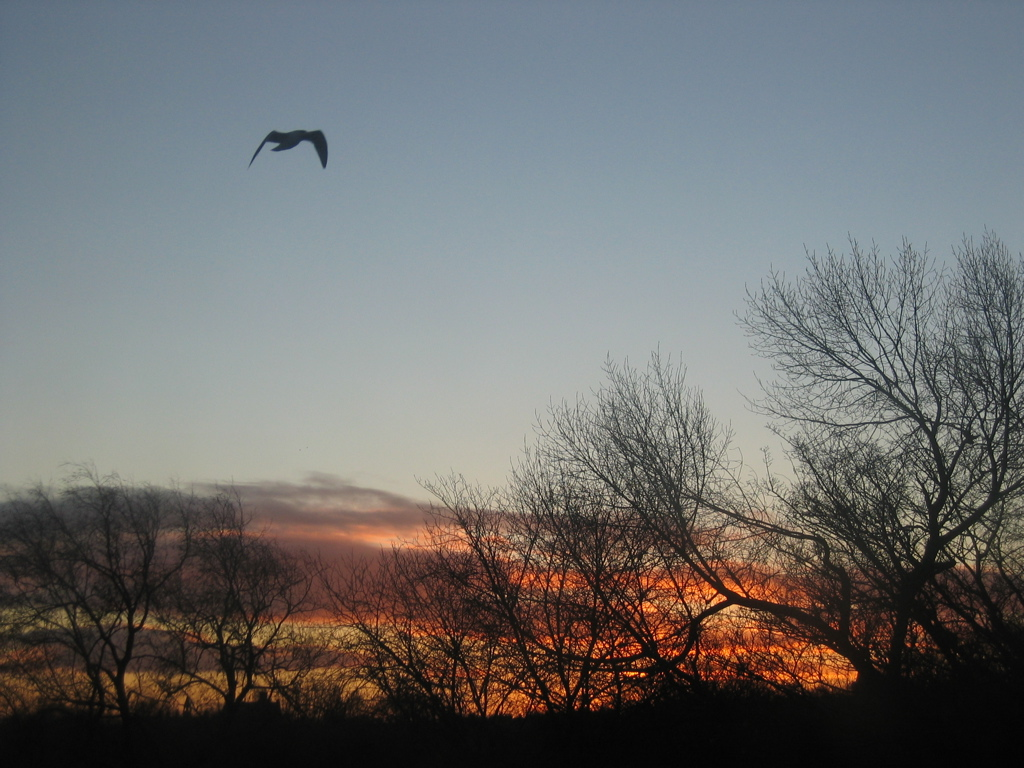 Another sunrise,  with seagull