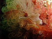 Lundy Sealife (1)