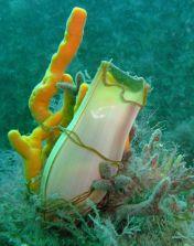 Lundy Sealife (20)