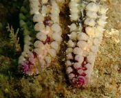 Lundy Sealife (37)