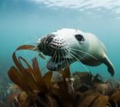 Lundy Seal Nick Blake 18