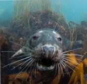 Lundy Seal Nick Blake 19